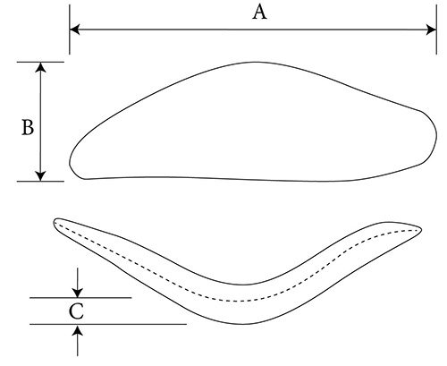SP2 Malar diagram