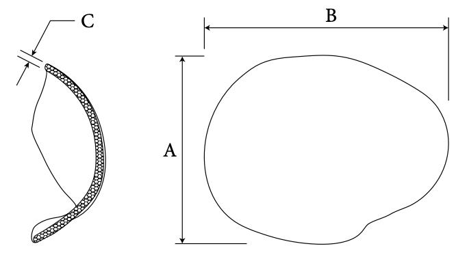 Cranial Hemisphere diagram