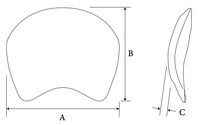 Capocelli Plate diagram